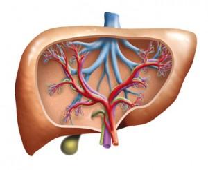 Leberzirrhose, MRT Diagnostik, Hepatitis C